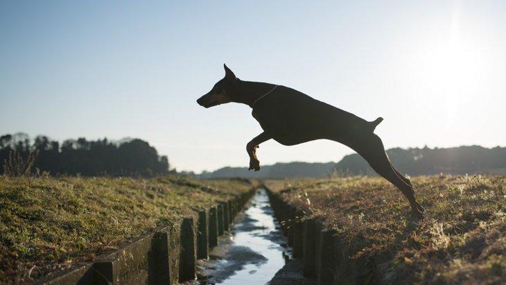 犬が脱走しようとする理由と対策