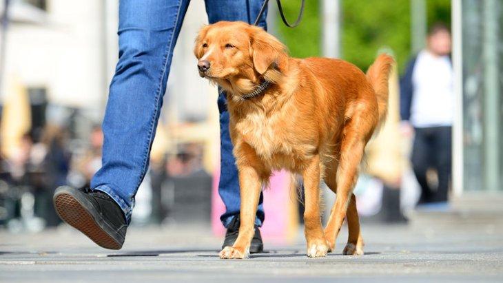 犬の散歩をしながらパトロール!「防犯ウォーキング犬」とは?