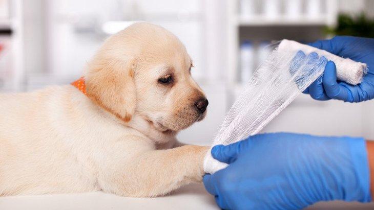 犬が片足を上げている時の心理4つ!病気やケガの可能性も