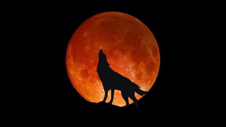 満月の日は犬が狂暴になるってホント?