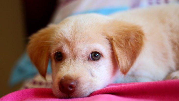 犬のベッドを清潔に保つお手入れ方法