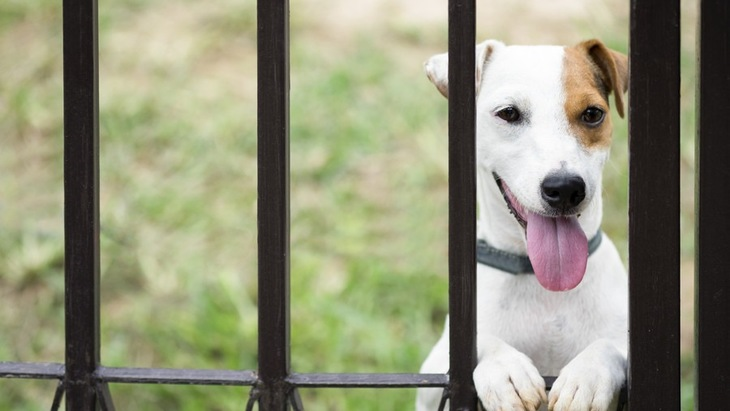 犬を自宅の庭で遊ばせるときの注意点3つ
