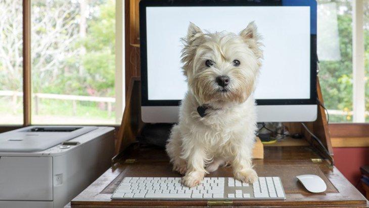 犬は普段、飼い主のどこを見ているの?よく観察しているポイント4選