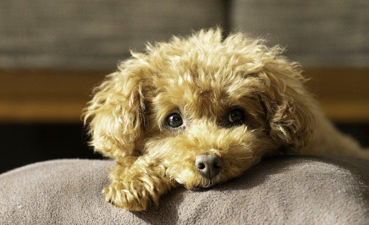 犬が『捨てられた』と感じてしまう飼い主の行動3選