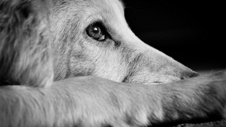 どんな行為が動物虐待になるの?見かけたらどうすればいい?
