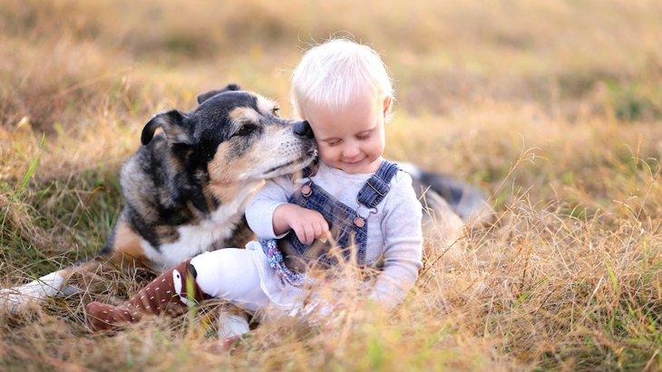 犬がする優しい行動7選