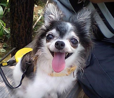 保護犬がくれたたくさんの幸せ。