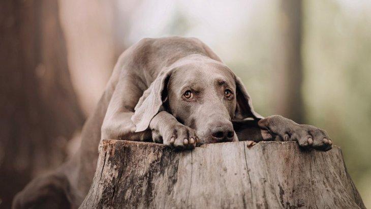 犬がテーブルや机の上に登る心理4選!どんな意味がある?どう対処すべき?