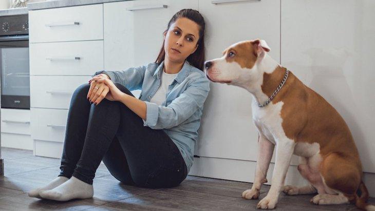 愛犬にイライラしてしまう…どう対処すべき?