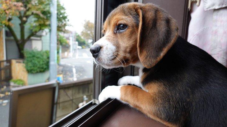 犬が家の中から外を眺めている時の心理5選