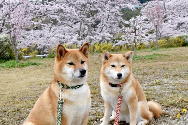 犬同士の「じゃれあい」と「喧嘩」の見分け方