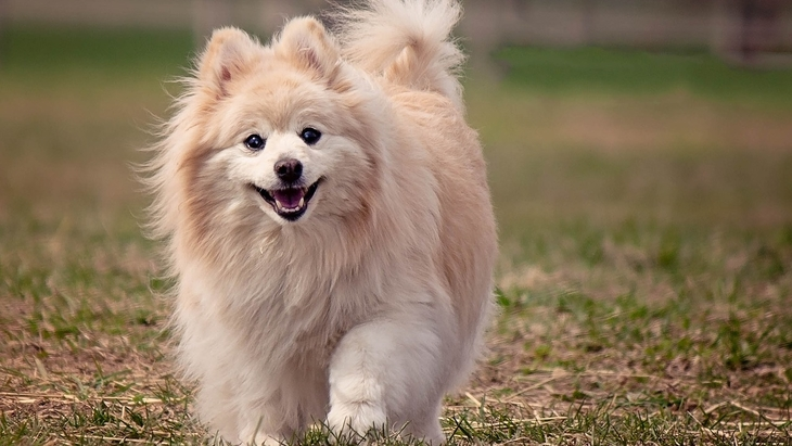 犬のスマイルはすべてハッピーだとは限らない!ストレススマイルもあるんです