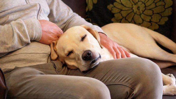 犬が人に甘えてくる理由5選