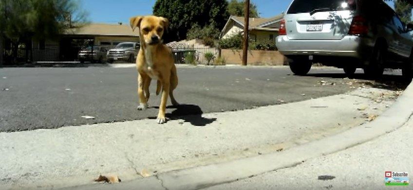 男性を信用しない捨て犬の保護に苦戦…そこで通りすがりのおばあさんに!