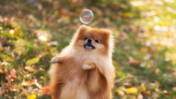犬がジャンプを繰り返すのは止めさせた方がいいの?
