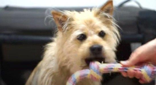 もう離さない♡元野犬の愛されレディがあるものに夢中!?お散歩にまで持ち出す姿にほっこり♡