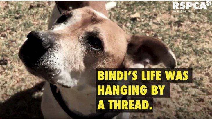 悪性腫瘍を長期間放置された犬のレスキュー。飼い主は裁判へ(前編)