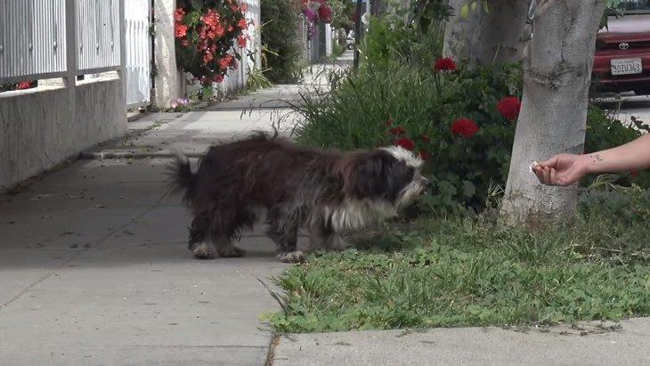 偶然見かけた犬を保護すると…表情が絶望から希望に変わった!