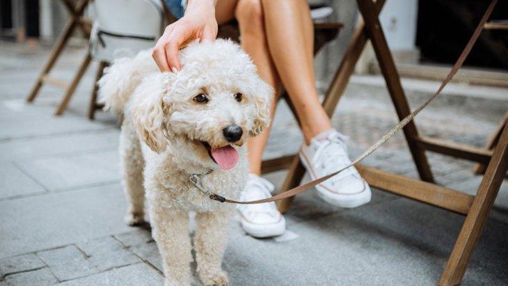 犬のオフ会に参加する時のマナーと注意点