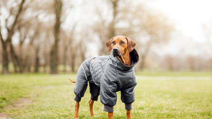 寒い冬、お洒落のためだけではない犬の洋服が必要な時