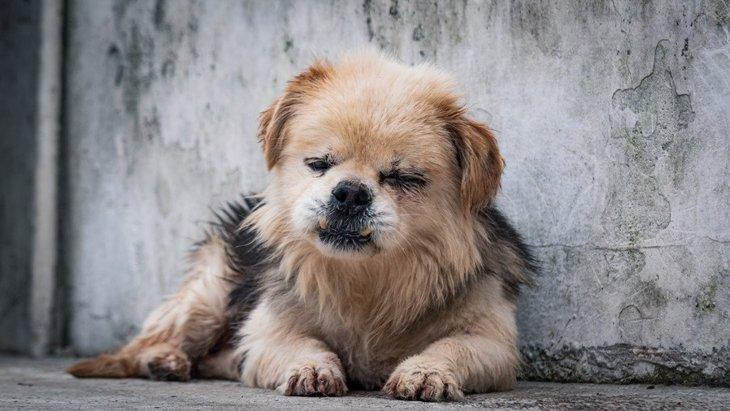 犬が『息苦しい時』にする仕草や行動8選