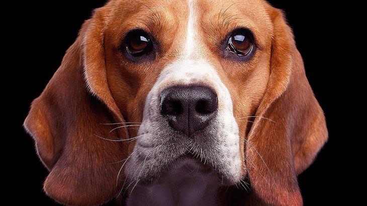 愛犬のストレスに繋がる飼い主の行動6選