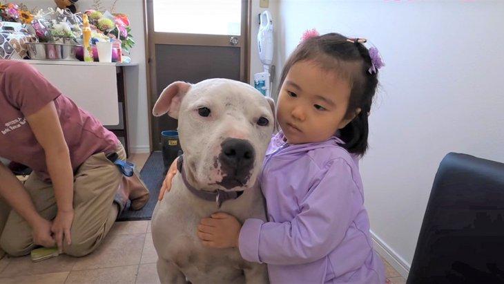 体は穴だらけ…元闘犬の噛ませ犬『ポチ』が保護犬を救う相棒になるまで
