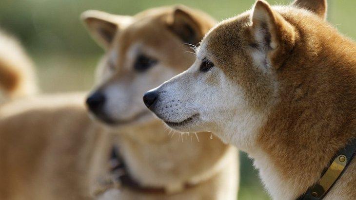 犬の世話に疲れた人へ。思い出してほしい3つの大事なこと。