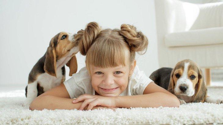 先住犬と子犬を多頭飼いしたい!相性の問題やトラブルなく仲良くさせる方法