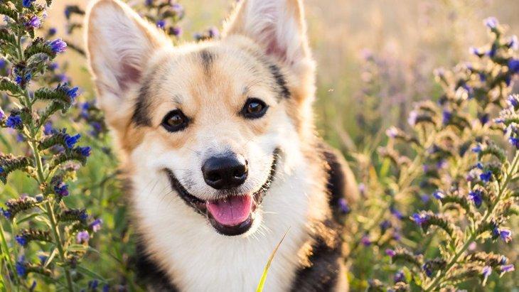 わーい!犬が喜んでいるときに見せる仕草や行動6つ