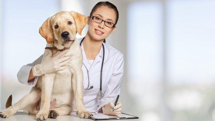 犬のフィラリア症を予防するには その薬と病気について