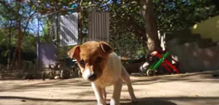 首の傷から出血している小さな子犬をレスキュー