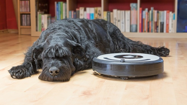 犬とお掃除ロボットを仲良くさせる4つの方法