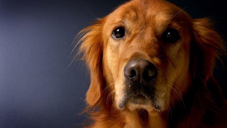 犬に嫌われたときに飼い主が取るべき5つの行動