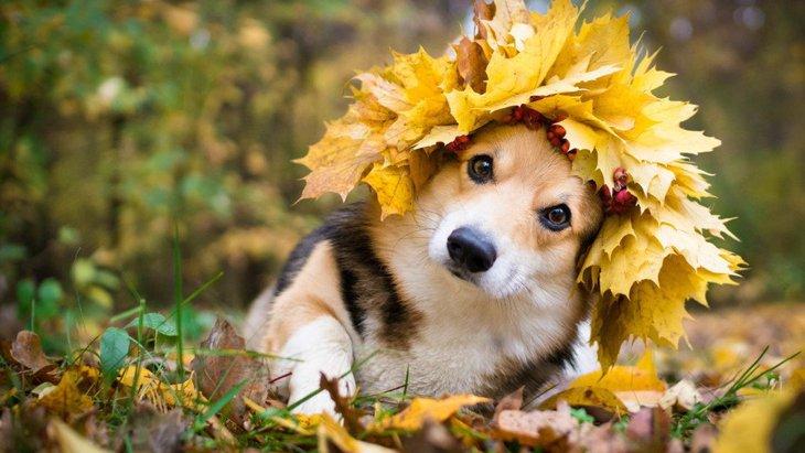 犬が食べたらNGな『秋の食べ物』2選