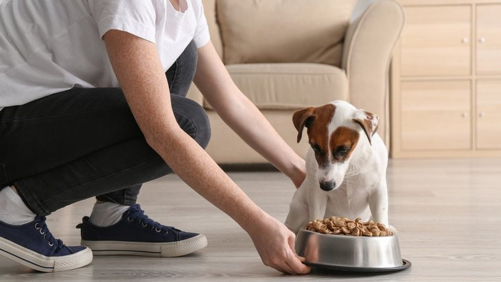 犬が『空腹』のときに見せる行動や仕草8選