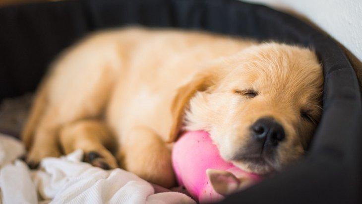 犬の寝付きを良くする方法3つ