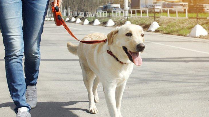 犬の散歩を炎天下でする危険性について