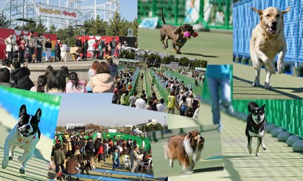 イヌリンピック2015 都内開催!犬の大運動会!