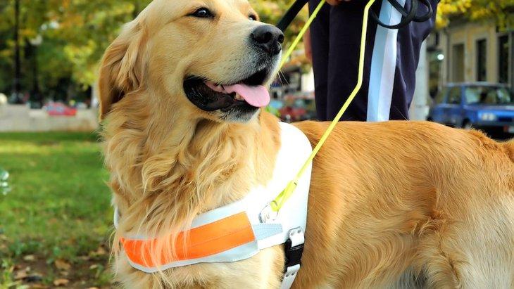 犬の認知能力は他の動物よりも飛び抜けているわけではないという研究結果