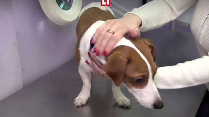 「耳の形が気に入らない!」愛犬を整形させようとした身勝手な家族