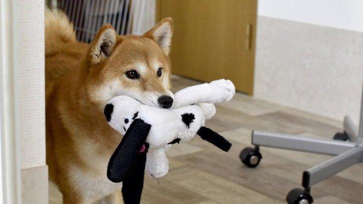 犬が飼い主に気を使っている時にする仕草や行動5選