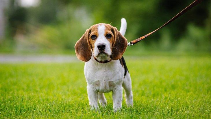犬の散歩ルートを変えるべき理由3選!毎日変えた方がいいって本当?