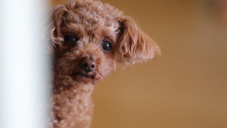きゅん♡犬が見せる『可愛すぎる行動』9選