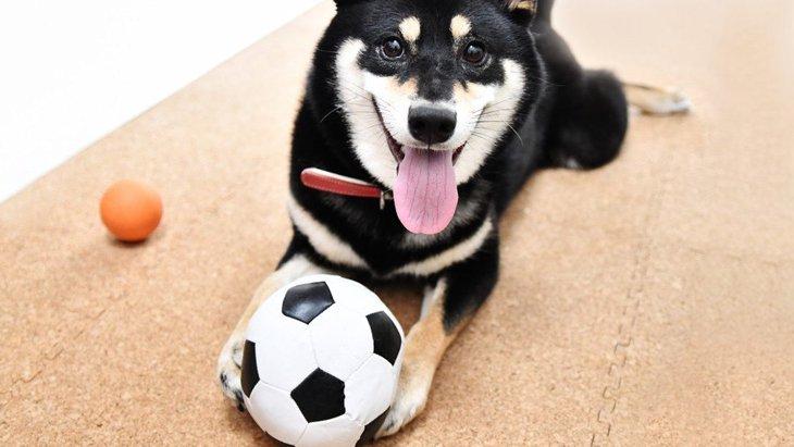 好奇心旺盛な犬の特徴6つ