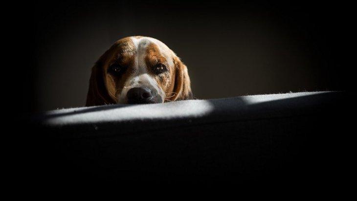 犬が「嫌いな犬」を目の前にした時に見せる行動5つ