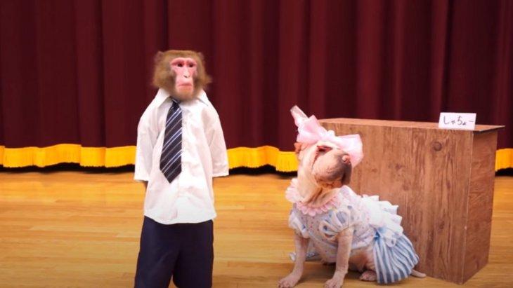 パロディドラマ!お猿&わんこたちが半沢直樹だったら!?
