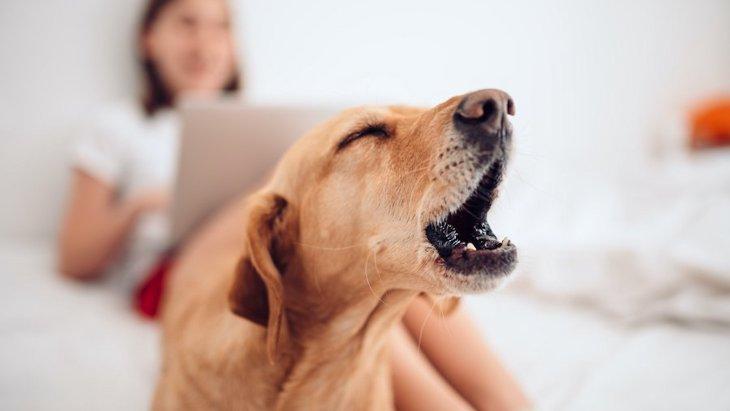 犬が「遊んでくれている」と勘違いする飼い主の行動3つ