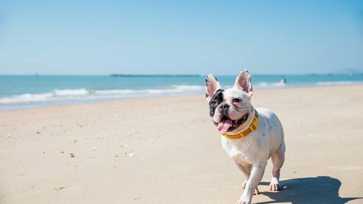 犬が『暑いよ~』と言っている時の仕草や行動5選