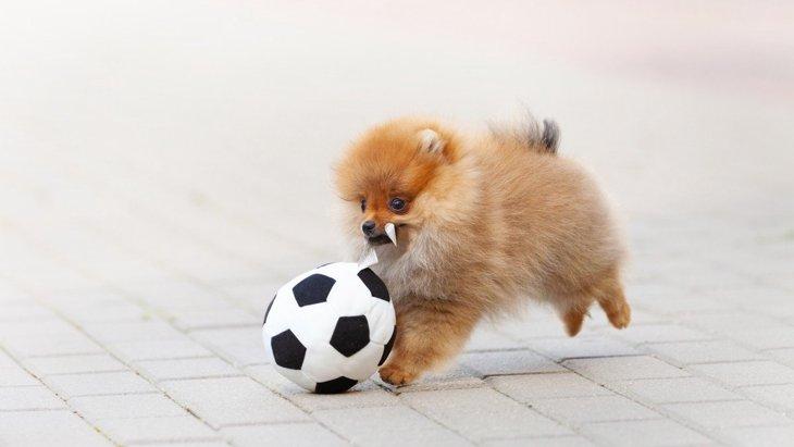 犬にとって『良い刺激』を与えられる遊びや散歩の仕方6選